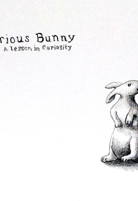 Curious Bunny
